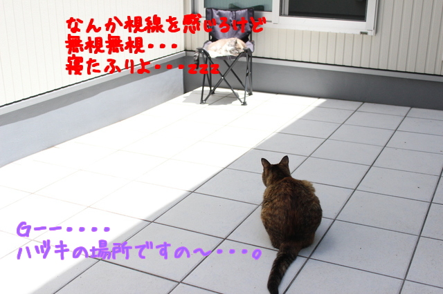 zHZBbpnadGfoMeb1495329397_1495329495.jpg