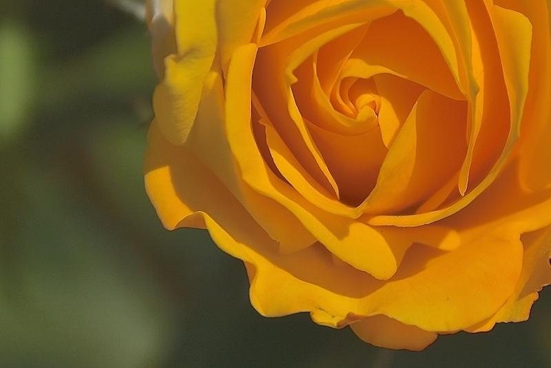 薔薇の薫りによせて…part2