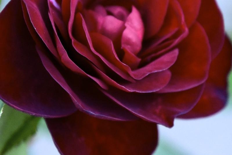 薔薇の薫りによせてpart2
