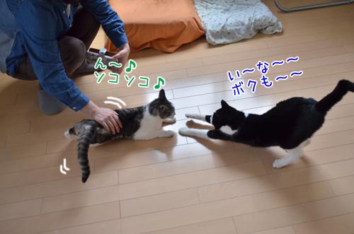 DSC_7920_2.jpg