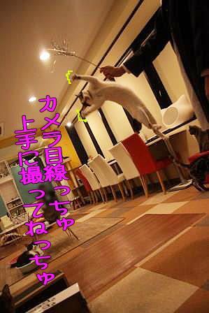 松子20170509-01