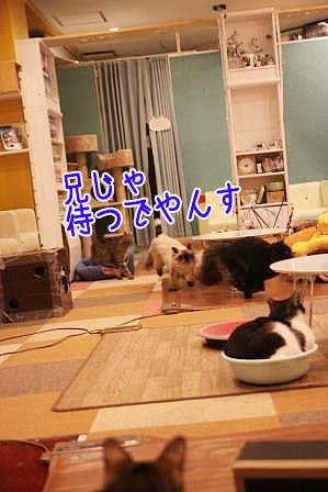 やじろう20170510-02