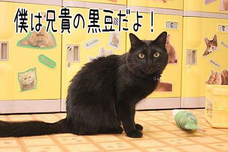 黒豆20170612