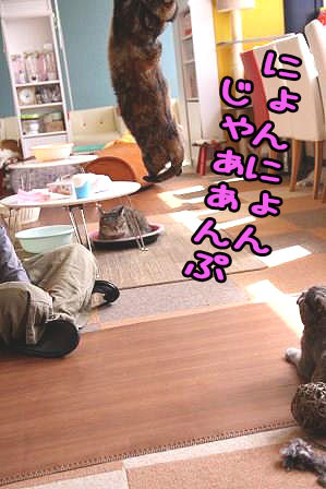 いちご先輩20170626-03