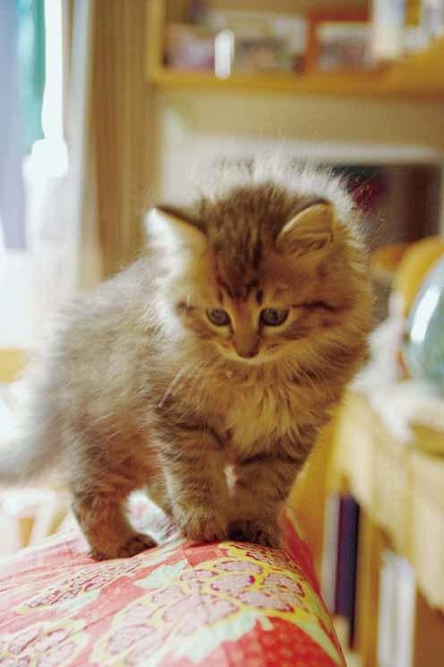②灰♂保護した方が貰った猫