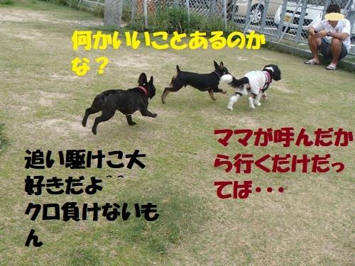 P6240197_convert_20170625133317.jpg