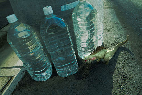 犬猫避け用のペットボトルの水を飲もうとしている、シン・ゴジラ第二形態、蒲田くん