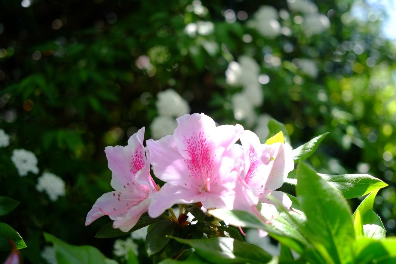 DSCF0146-fc2.jpg