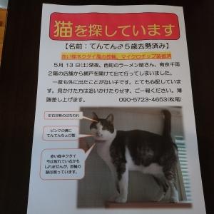 てんてん捜索チラシ(新)