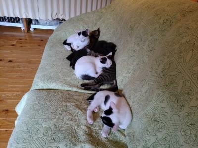 里親募集の子猫達