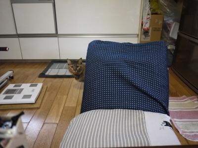 先住猫のラムちゃん