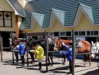20170509_ホロシリ乗馬クラブ1