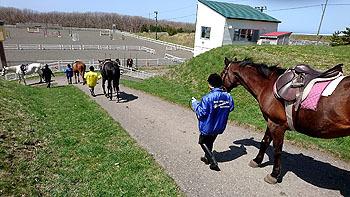 20170509_ホロシリ乗馬クラブ2