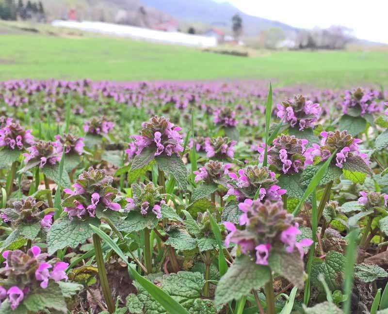 daily_farm_tpor_spring20.jpg