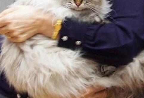 ねこさん イタリア 泥棒猫 2重生活 夜の飼い主