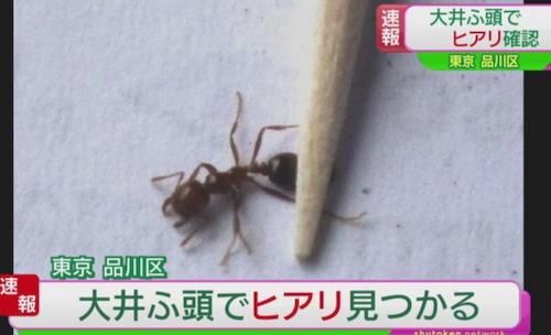 ヒアリ 特定外来生物 世界の侵略的外来種ワースト100 大井埠頭 神戸港 名古屋港 中国