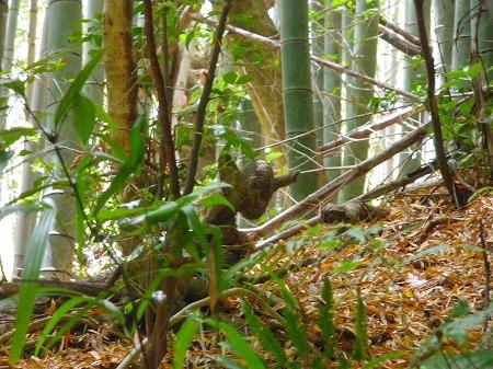 20170508竹林の動物
