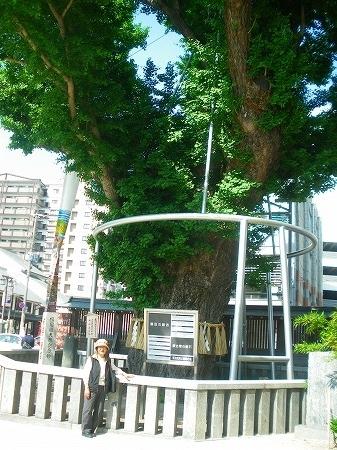 20170511 櫛田神社の大銀杏