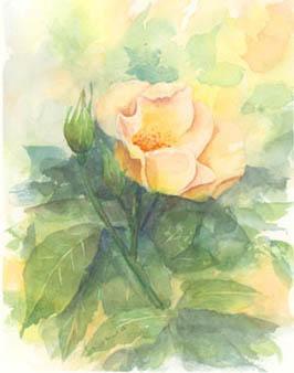 5_9庭の花