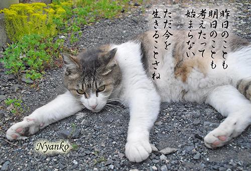 にゃん子garden2