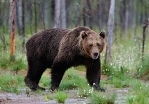 森の中でクマさんと出会う