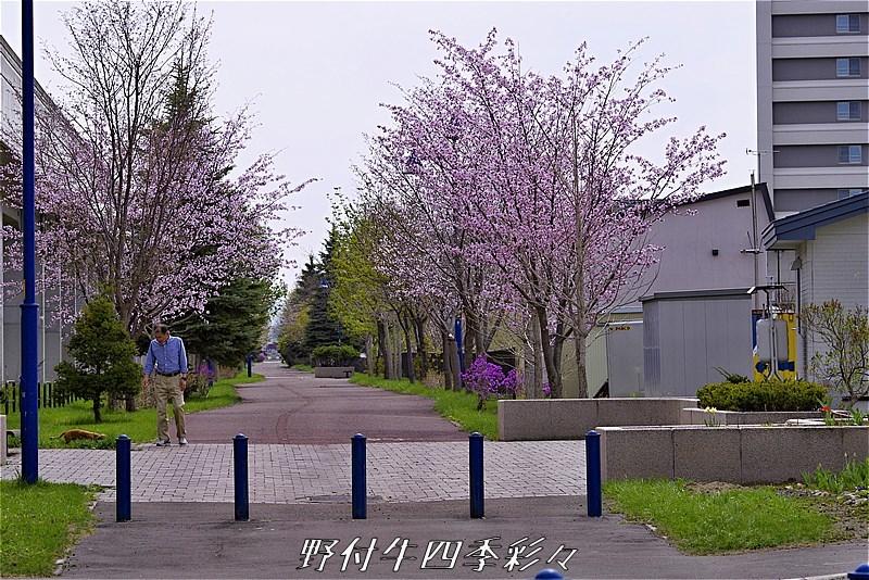 s-K5-20170505-132253-0.jpg