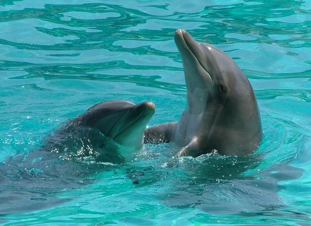 イルカ 共鳴 コミュニケーション