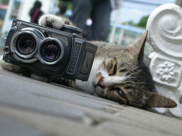 猫 カメラ 眺める
