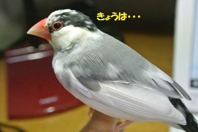 DSC_7298済