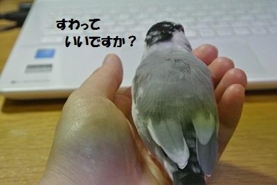 DSC_7411済