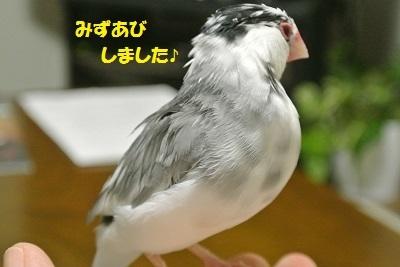 DSC_7442済