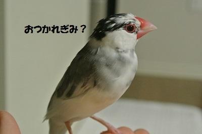 DSC_7446済