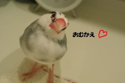 DSC_7558済