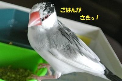 DSC_7577済