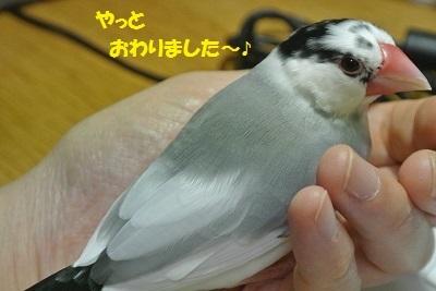 DSC_7569済