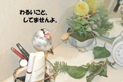DSC_7627済