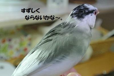 DSC_7661済