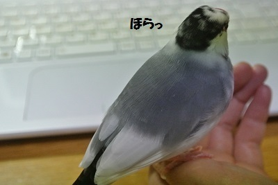 DSC_7677済