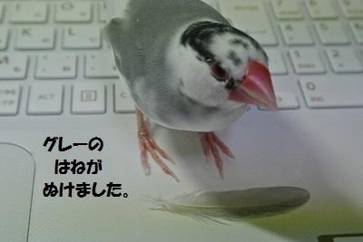 DSC_7679済