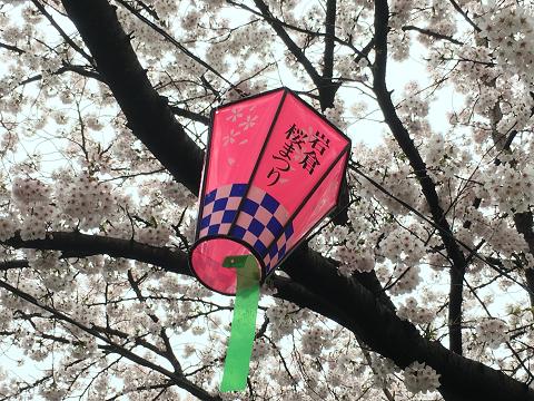 1159-岩倉桜まつり