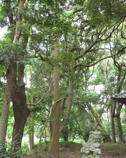 駒形神社-52