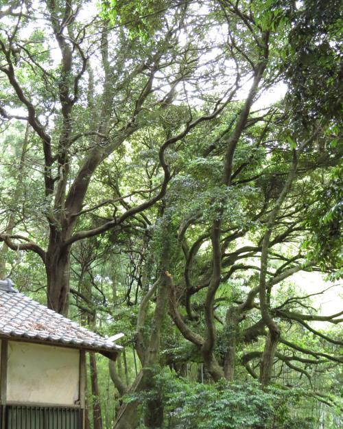 駒形神社-53
