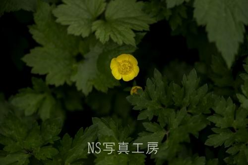 _DSY2404.jpg