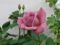 ナンフェア 『国際バラとガーデニングショウ』