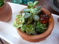 ナンフェア 多肉植物の寄せ植え ミニ