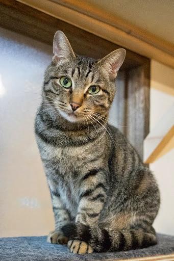 cat405-4.jpg
