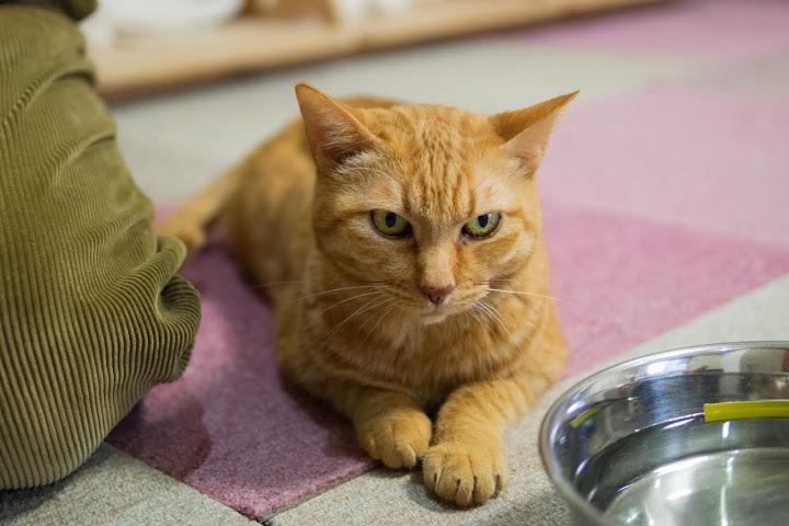 cat428-5.jpg
