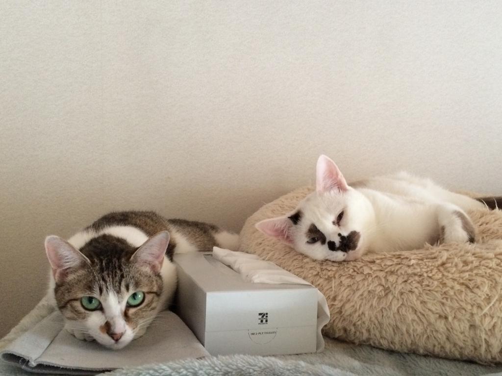 レイ&ひまわり (16)