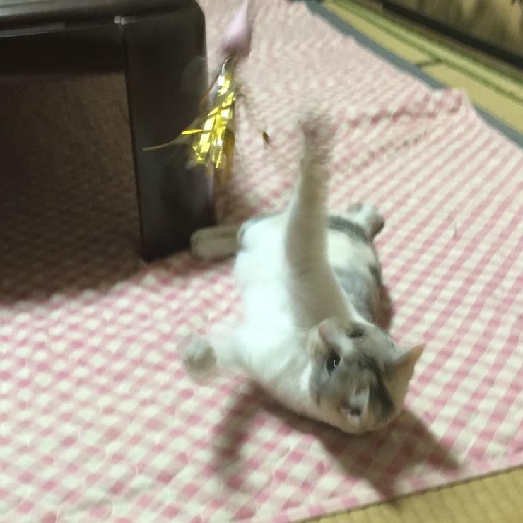 キャリコ幸せに (11)