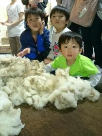 羊の毛と坊っちゃんたち